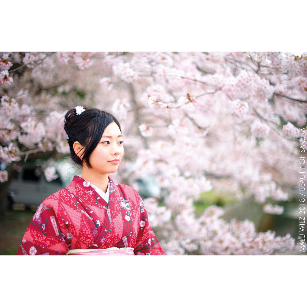 Websize JPG-Visual-Beauty-of-Sakura-Malu-Wilz